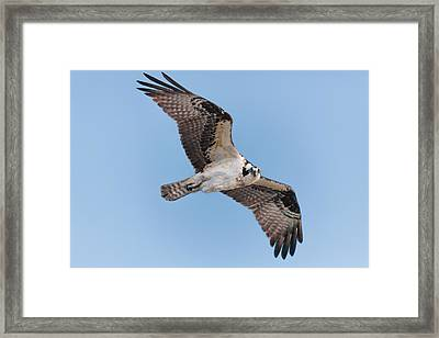 Eyes On You Framed Print by Rob Travis