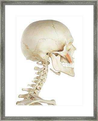 Facial Muscle Framed Print by Sciepro