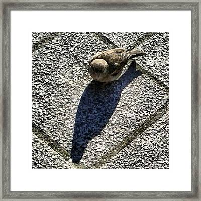 faith Is The Bird That Feels The Framed Print
