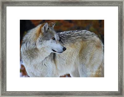 Fall Colors Framed Print by Adam Jewell