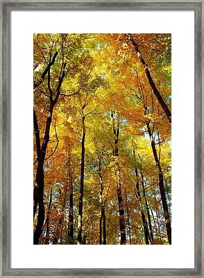 Fall Framed Print by F Salem