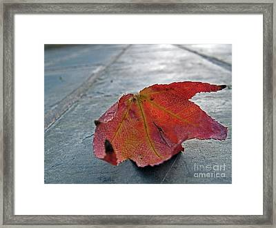 Fall Leaf Framed Print