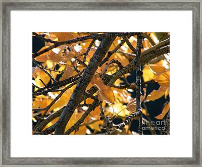 Framed Print featuring the photograph Fall Leaves by Ann E Robson