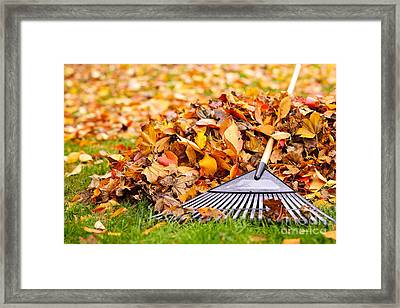 Fall Leaves With Rake Framed Print by Elena Elisseeva