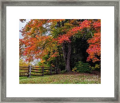 Fall Maple Framed Print by Anthony Heflin