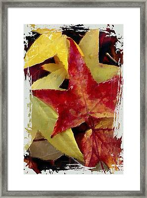 Fallen Leaves Framed Print by Bonnie Bruno