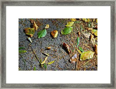 Fallen Leaves Framed Print by Carlos Caetano