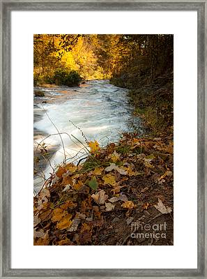 Fallen Leaves Framed Print by Iris Greenwell