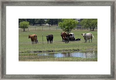 Family Gathering Framed Print by Ruth  Housley