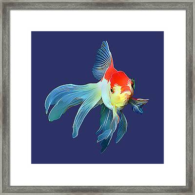 Fantail Goldfish Framed Print by Wernher Krutein