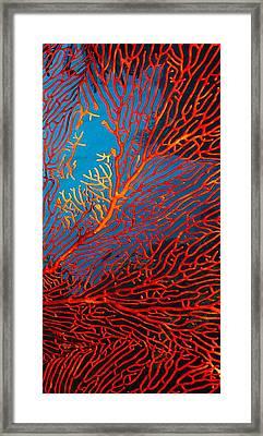 Fantasy Fan Framed Print by Paula Marie deBaleau