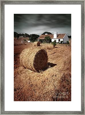 Farmland Framed Print by Carlos Caetano