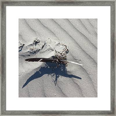 Framed Print featuring the photograph Feather by Aurora Levins Morales