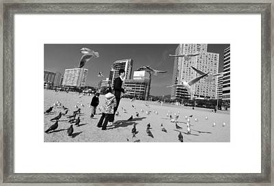 Feed The Birds Framed Print