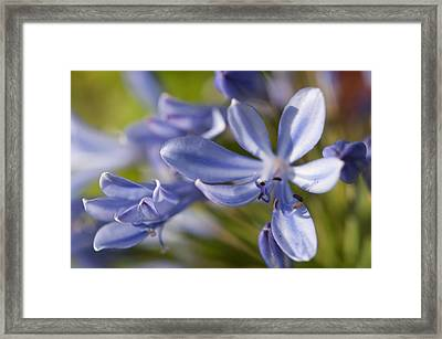 Feeling Blue Framed Print by Miguel Winterpacht