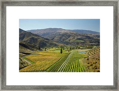 Felton Road Vineyard In Autumn Framed Print by David Wall