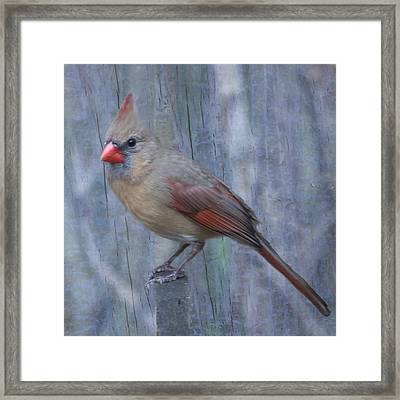 Female Cardinal Framed Print by John Kunze