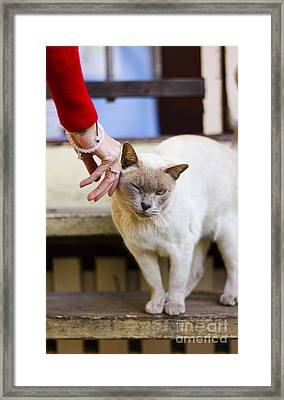 Female Cat Owner Patting Her Burmese Cat  Framed Print