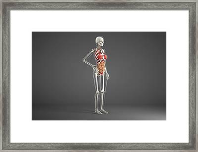 Female Internal Organs Framed Print by Roger Harris/science Photo Library