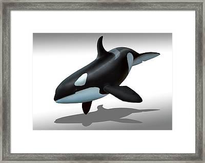 Female Killer Whale Framed Print by Mark Garlick