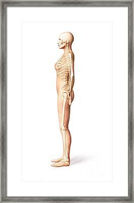 Female Standing, With Skeletal Bones Framed Print by Leonello Calvetti