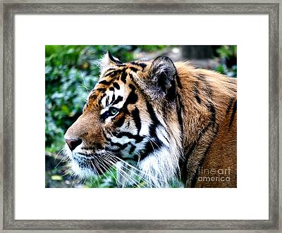 Feral Look Framed Print