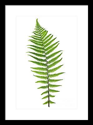 Green Leaf Photographs Framed Prints