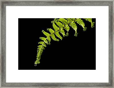 Framed Print featuring the photograph Fern With Raindrop by Trevor Chriss