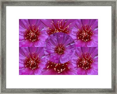 Festival Of Lights And Celebrations Created Out Of Flower Petal Pistil Anther Stigma Filament Style  Framed Print