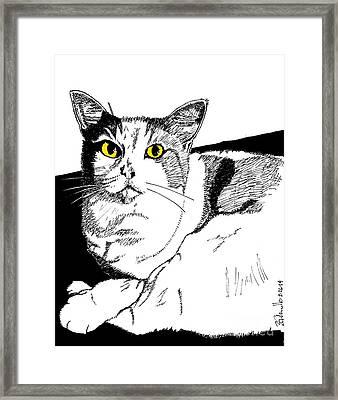 Fido Framed Print by Andrew Cravello