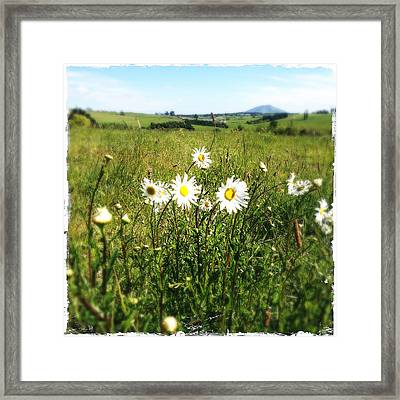 Field Of Flowers Framed Print by Les Cunliffe