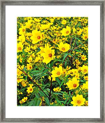 Field Of Flowers Framed Print by Frozen in Time Fine Art Photography