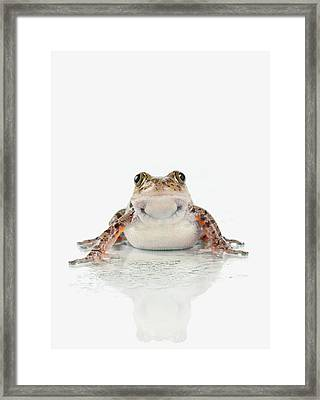 Fire-leg Walking Frog On White Framed Print by Corey Hochachka