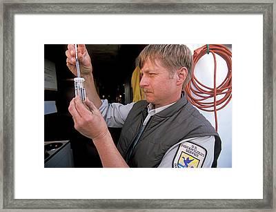 Fish Stocking In Lake Michigan Framed Print