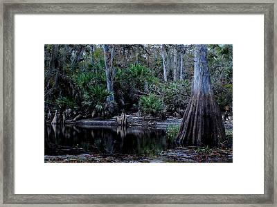 Fisheating Creek 05 Framed Print