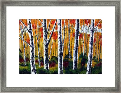 Five Birches Framed Print