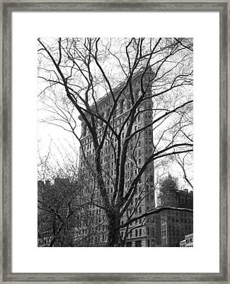 Flat Iron Tree Framed Print