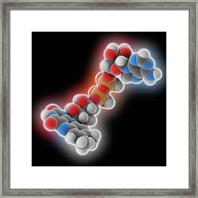 Flavin Adenine Dinucleotide Molecule Framed Print