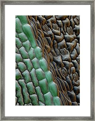 Flax Leaf Stomata Framed Print by Stefan Diller