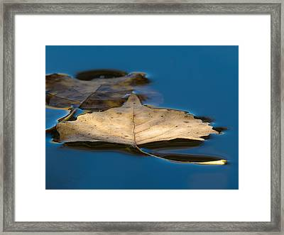 Floating Framed Print by Beverly Parks