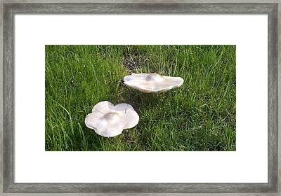 Floating Mushrooms Framed Print