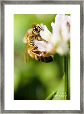 Flora And Fauna Framed Print