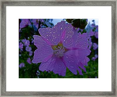 Flower After Rain Framed Print