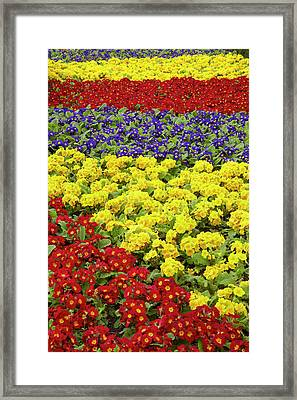 Flower Garden At Dunedin Railway Framed Print by David Wall