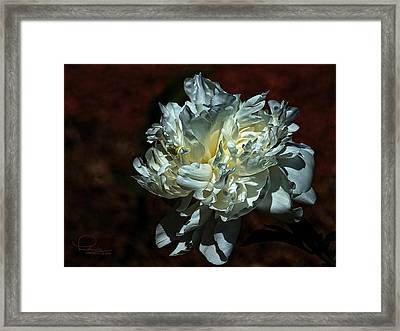 Flower Framed Print by Ludwig Keck