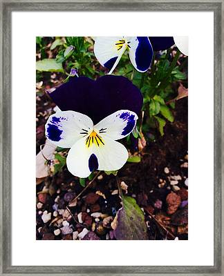 Flower Framed Print by Niki Mastromonaco