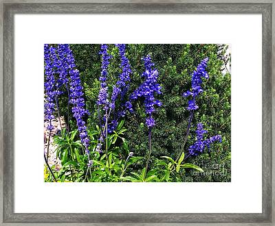 Framed Print featuring the photograph Flower by Rose Wang