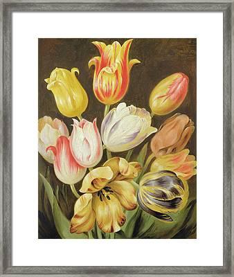 Flower Study Framed Print by Johann Friedrich August Tischbein