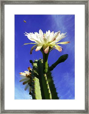 Flowering Cactus 3 Framed Print