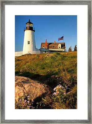 Flowering Fall Asters Below Pemaquid Framed Print by Brian Jannsen